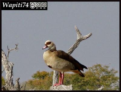 Balade australe... 11 jours en Namibie IMG_0361