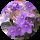 Flora Rainow