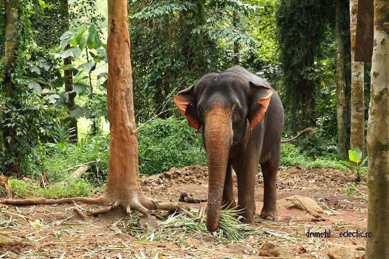Ban Kwam Chang elephant reserve