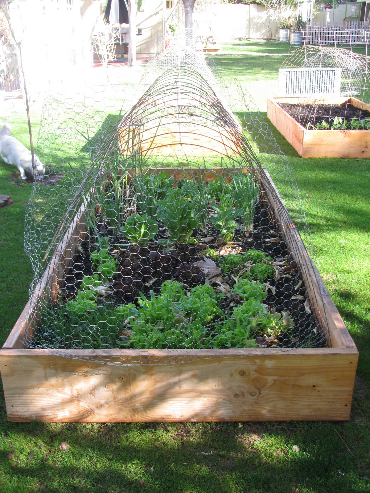Garden And Raised Beds
