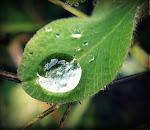 Дождинка.