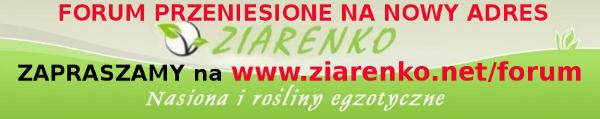 Forum Ogrodnicze - ZIARENKO Strona G��wna