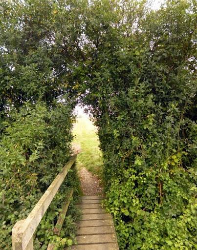 Green archway near Linton