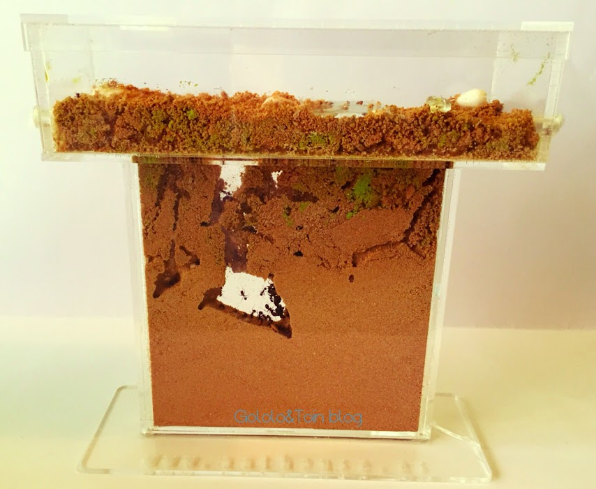 hormiguero-artificial-arena-acrilico-niños-regalo-hormigas-criar-messor-barbaria