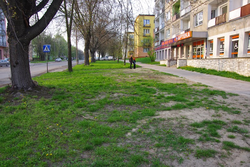 Po wschodniej stronie ulicy - pomiędzy drzewami a chodnikiem.