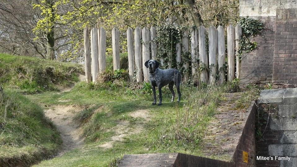 Balades canines en Nord (59)/Pas de Calais (62) - Boulogne-sur-Mer, Calais et Lille - Page 4 DSC01935