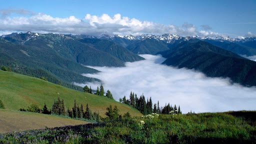 Hurricane Ridge, Olympic Peninsula, Washington.jpg