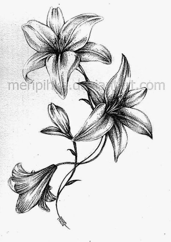 Lily Tattoos Designs And Ideas  Page 10