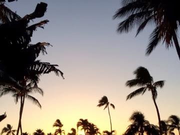 Maui Wow aka Tropical Paradise