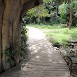 Path above Camp Cove (255320)