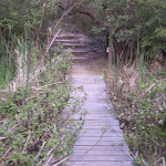 On the wetter sections there is often boardwalk (5615)
