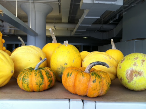 Pumpkins atop bookcases, waiting to be carved.