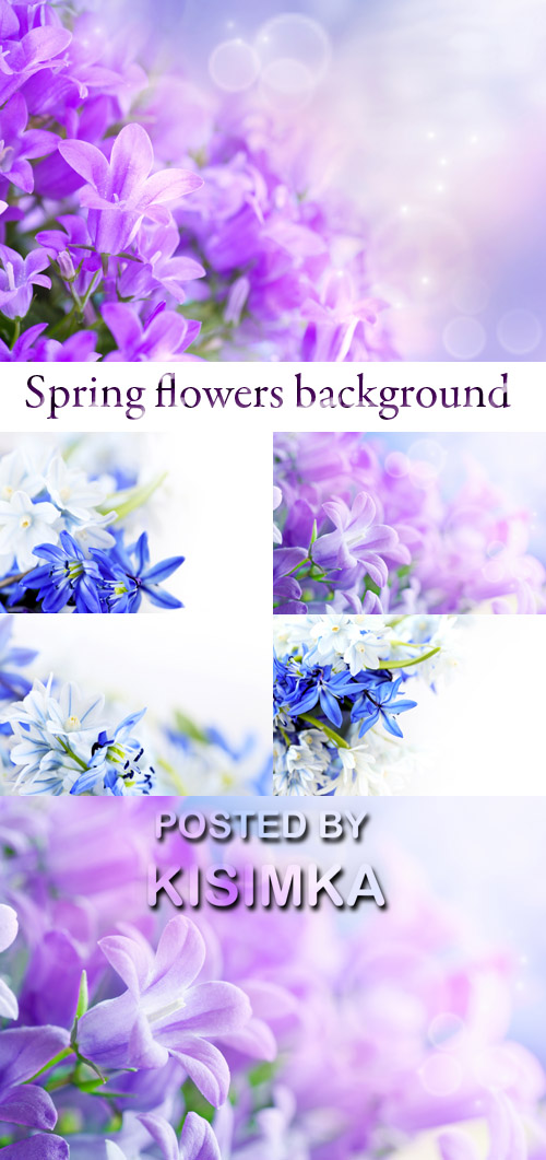 Stock Photo: Spring flowers background 12