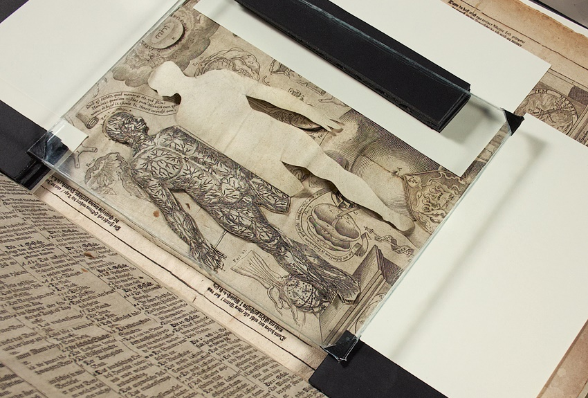 17th century medical pop-up book digitised