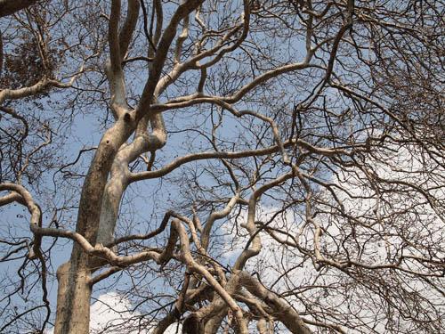 trek-shamantree2.jpg