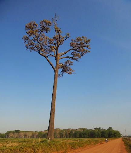 Brasil - Rota das Fronteiras  / Uma Saga pela Amazônia 20140901_090600