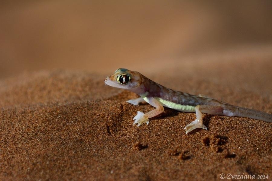 Namibia+2014_027.JPG