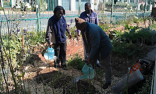 Learners at a soil preparation workshop