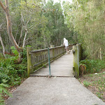 Timber platform over Owens Creek on the Owens Walkway in Redhead (390980)