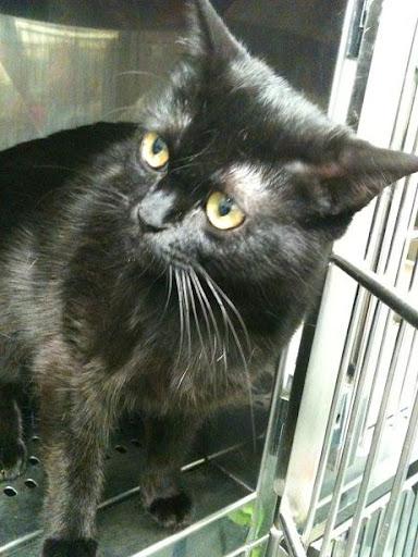 3 gatitos de 2 meses y mami de 1 año dejados en clinica (en Vitoria) ¡ADOPTADOS! IMG_1717