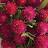 Dionne Kittling avatar image