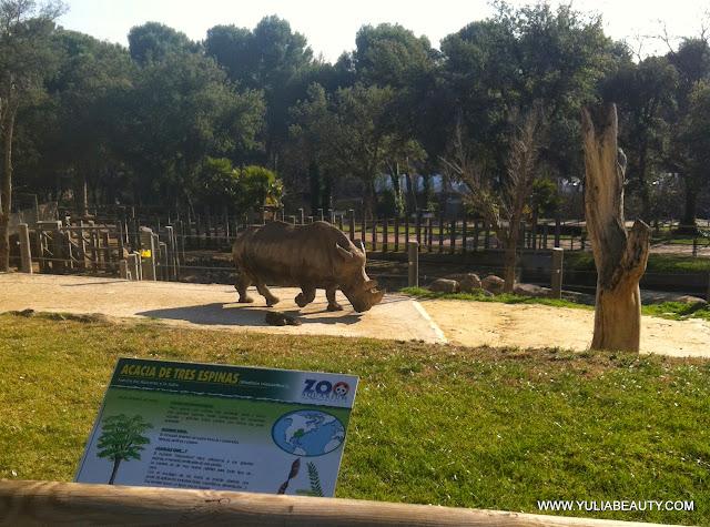 носорог в зоопарке мадрид