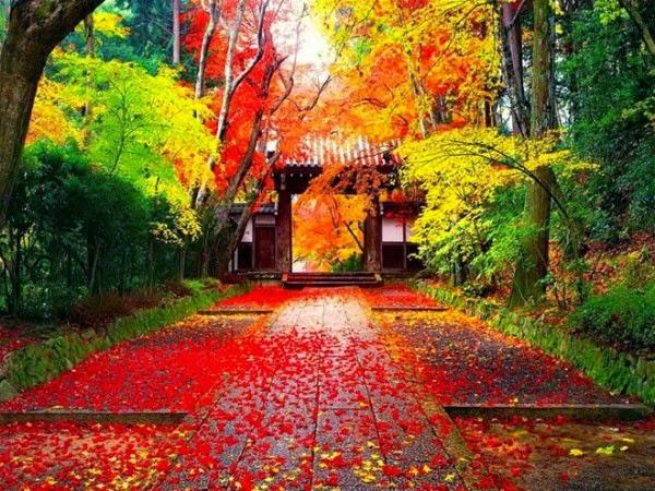 nét đẹp mùa thu nhật bản