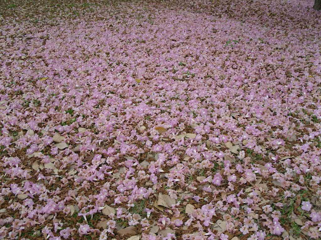 หัดเขียนกลอน ท้องทุ่งดอกไม้และนกกา