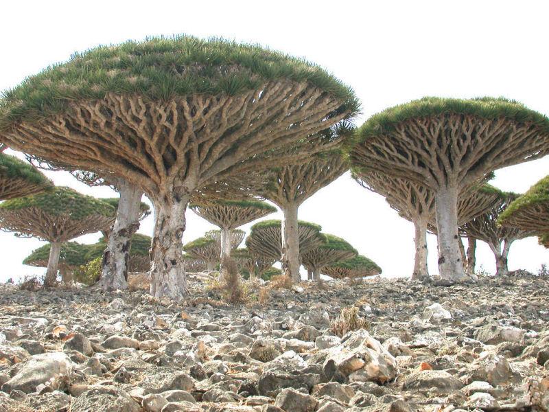 1. Socotra - Iêmen