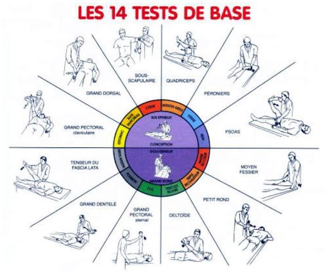 LE TEST MUSCULAIRE MANUEL 81