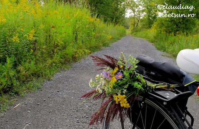 Bicicleta si flori de camp