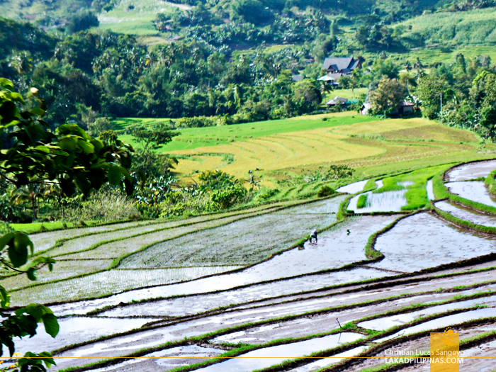 Rice Terraces En Route to San Carlos City