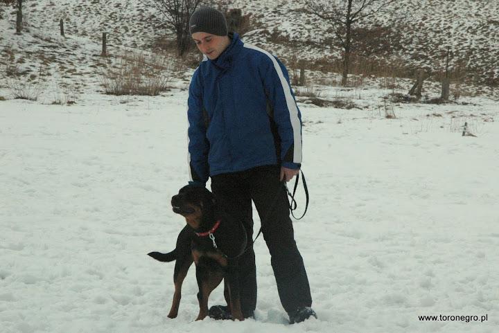 szkolenie psa obronnego toro negro