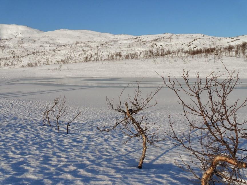 Norvège mars 2014 SAM_1308