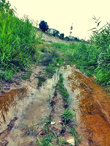 lacul vacaresti delta bucuresti iulie 2013