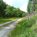 """Typische """"Autobahn"""" durch den Wald."""