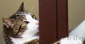 fotografo manatus foto mascotas macaco gato