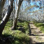 Cascade Trail (282989)