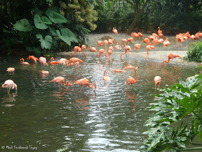 Jurong Bird Park Random Batch 2 Photo 12