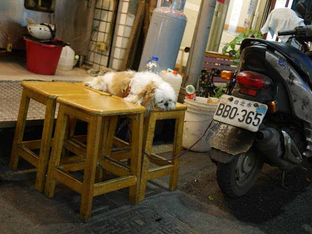 dog sleeping on top of two stools with its leash connected to a parked motorbike