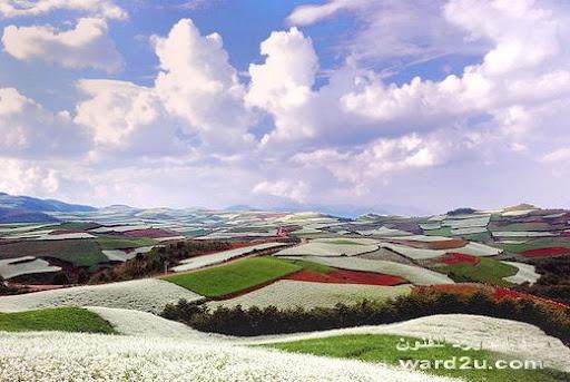 جنه من الزهور فى جنوب الصين