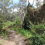 Weeds covering bush beside track (79666)