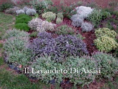 Progetti giardini online gratis progetti giardini privati for Aiuole sempreverdi