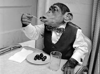 simpanse lebih banyak memakan buah