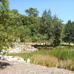 Richley Reserve pond on a sunny day at Blackbutt Reserve (401524)