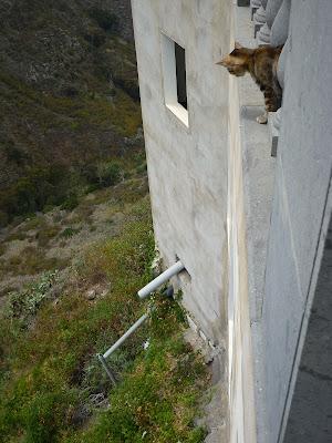 Katze in Moya