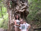 Árbol mágico en Cardenete