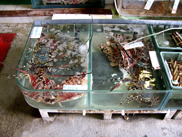 tanks of live shellfish for eating