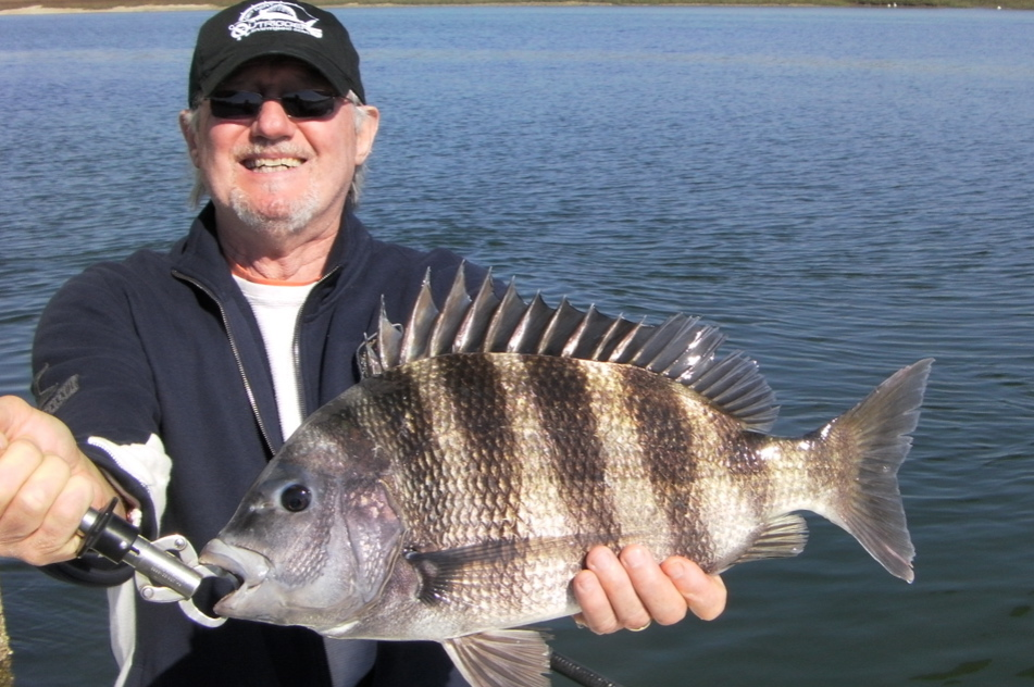 Hilton head fishing with off the hook fishing charters for Sheepshead fish eating