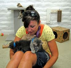 Western Arizona Humane Society promotes cat adoptions